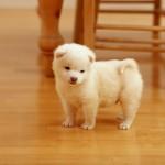 lovely-puppy-1920x1200-un-cachorro-muy-tierno